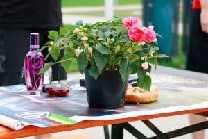 Ein Blumentopf auf dem Tisch