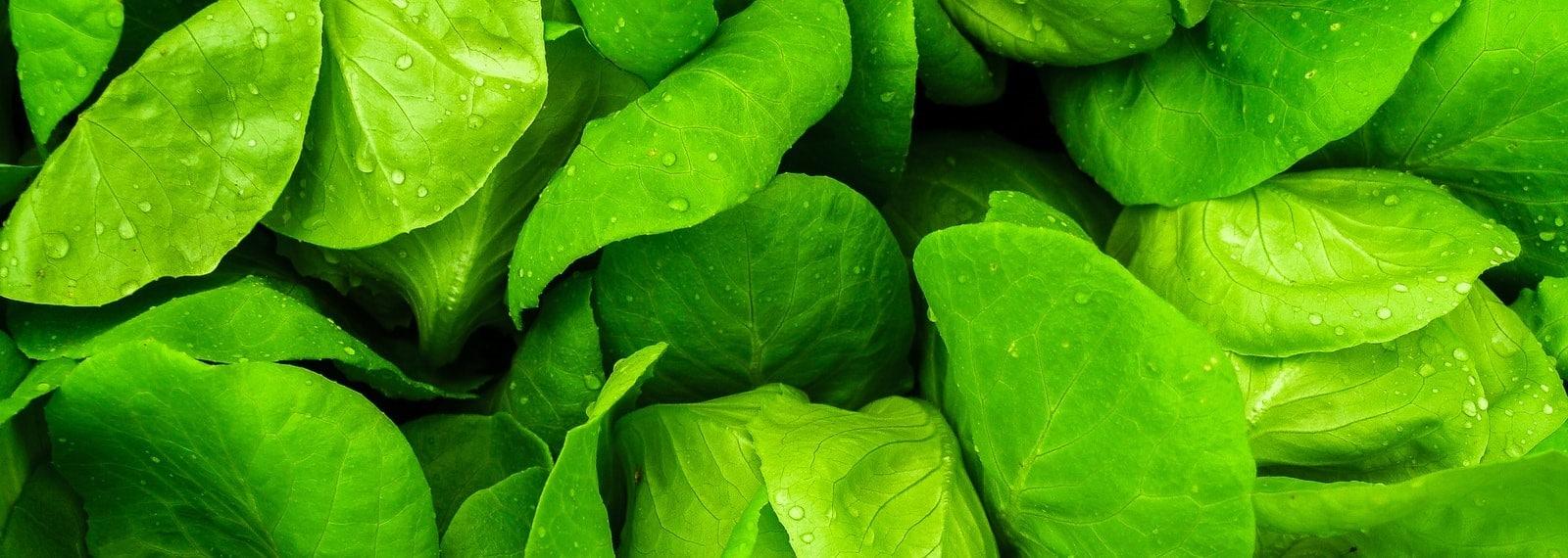 Fotos von Salatblättern