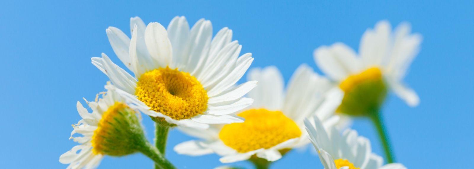 Blumen mit Himmel als Hintergrund