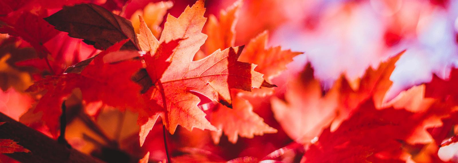 Feiertagsspecial Herbstblätter